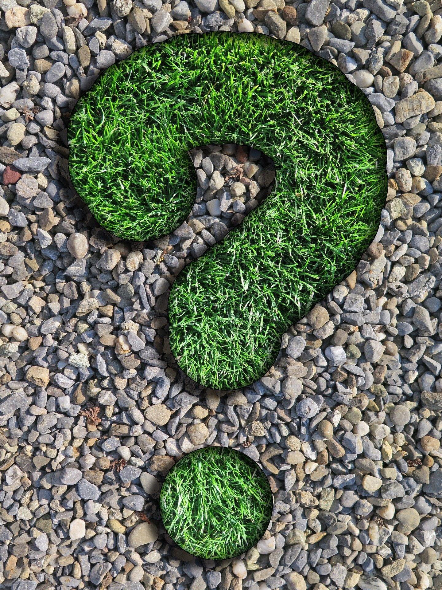 znak zapytania z trawy ułożony na drobnych kamykach